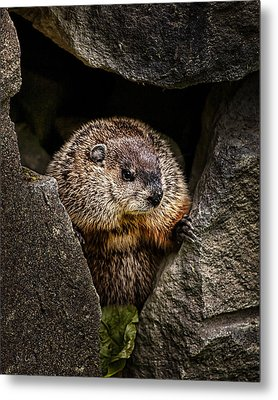 The Groundhog Metal Print