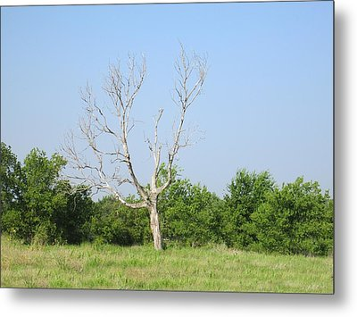 The Hanging Tree Metal Print by Rosalie Klidies