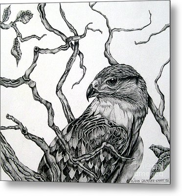 Metal Print featuring the drawing The Hawk by Alison Caltrider