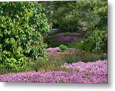 Metal Print featuring the photograph The Heather Path by Sabine Edrissi