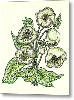 Metal Print featuring the drawing The Helleborous by VLee Watson