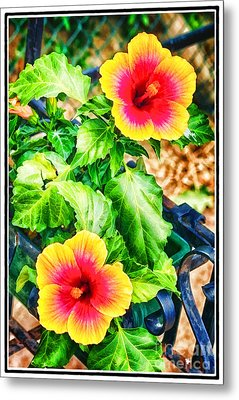 The Hibiscus Of Torcello Metal Print by Jack Torcello