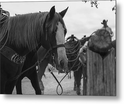 Metal Print featuring the photograph The Hitching Post by Amber Kresge