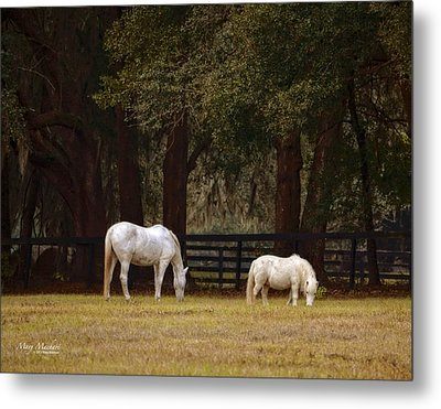 The Horse And The Pony - Standard Size Metal Print