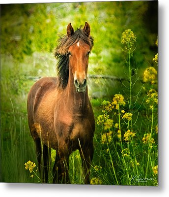 The Horse In The Wildflowers Metal Print