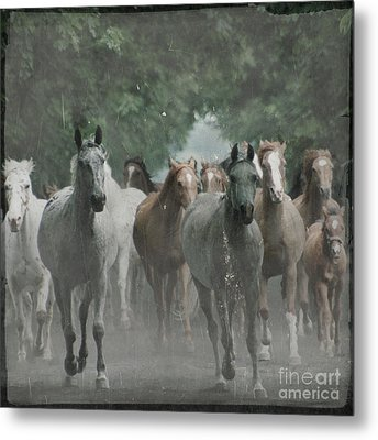 The Horsechestnut Tree Avenue Metal Print by Angel  Tarantella