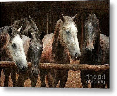 The Horses Metal Print by Angel  Tarantella