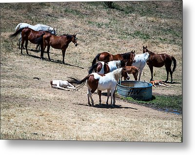 The Horses Of Placerville Metal Print