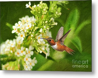 The Hummer And The Butterfly Bush Metal Print by Darren Fisher