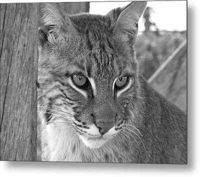 The Hunter Black And White Metal Print by Jennifer  King