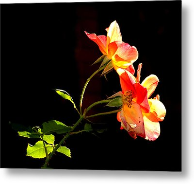Metal Print featuring the photograph The Illuminated Rose by AJ  Schibig