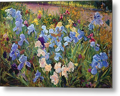 The Iris Bed Metal Print by Timothy Easton