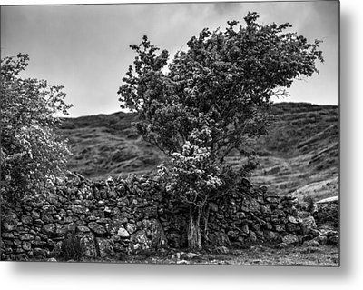 Metal Print featuring the photograph The Irish Wall And The Tree by Juergen Klust
