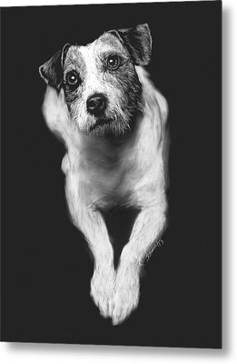 The Jack Russell Stare- Got Ball? Metal Print