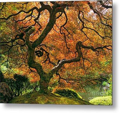 The Japanese Maple Metal Print
