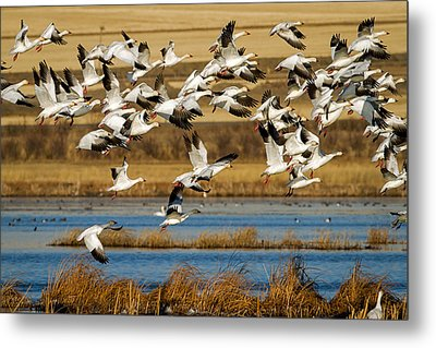 Metal Print featuring the photograph The Journey by Jack Bell
