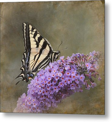 The Joy Of Nectar Metal Print by Angie Vogel