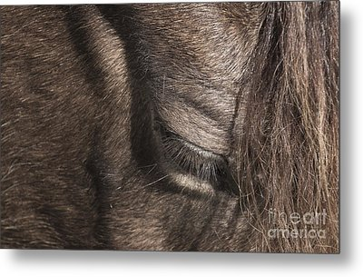 The Kind Eye Metal Print
