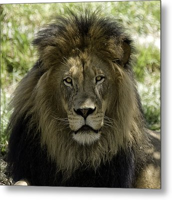 The King Metal Print by Gary Neiss