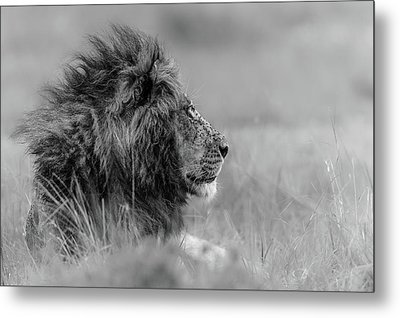 The King Is Alone Metal Print by Massimo Mei