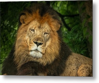 Metal Print featuring the photograph The King Rests by Linda Karlin