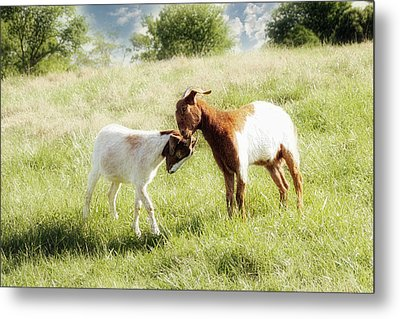 The Kiss Metal Print by Amy Tyler