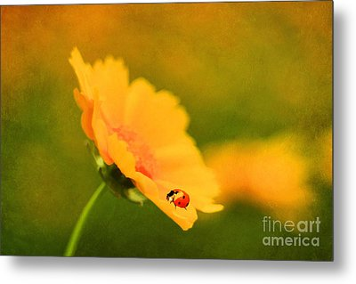 The Lady Bug Metal Print by Darren Fisher