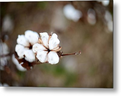 Metal Print featuring the photograph The Land Of Cotton by Linda Mishler