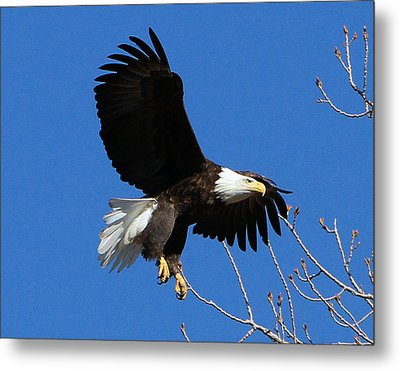 The Landing Metal Print by John Freidenberg