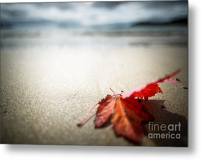 The Last Leaf Metal Print by Susan Cole Kelly Impressions
