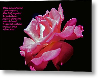 The Last Rose Of Summer Metal Print