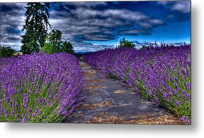 Metal Print featuring the photograph The Lavender Field by Thom Zehrfeld