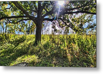 Metal Print featuring the photograph The Learning Tree by Daniel Sheldon