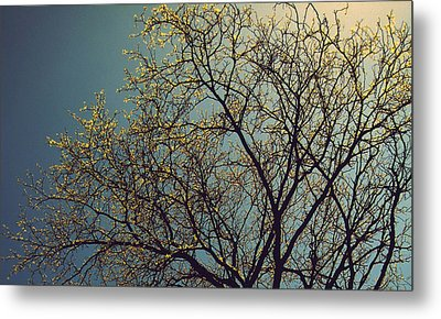 The Leaves Are Returning Metal Print by Jhoy E Meade