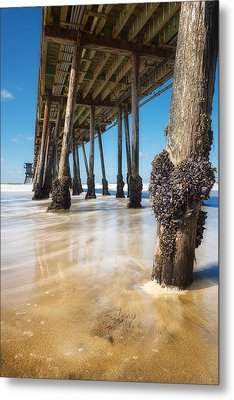 The Life Of A Barnacle Metal Print by Ryan Manuel