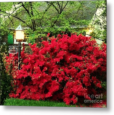 Metal Print featuring the photograph The Light Red Bush Bella by Becky Lupe