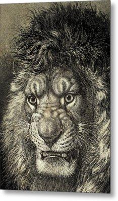 The Lion Metal Print by European School