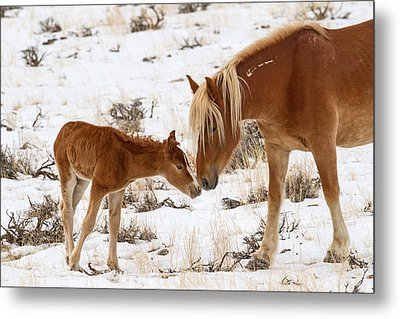 The Little One Metal Print