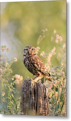 The Little Owl Metal Print by Roeselien Raimond