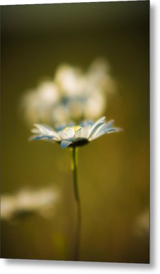 The Little Things In Nature Metal Print
