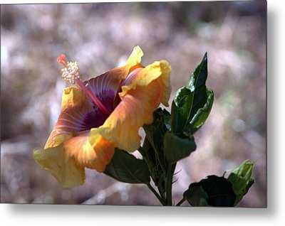 The Lonely Hibiscus Metal Print