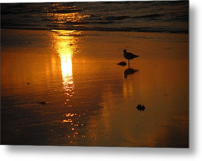 Metal Print featuring the photograph The Lonely Seagull by Susan D Moody