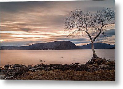 Metal Print featuring the photograph The Lonely Tree by Anthony Fields