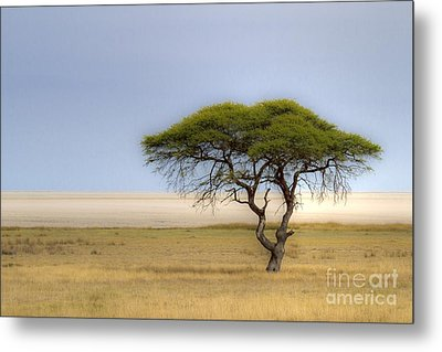 Metal Print featuring the photograph The Lonely Tree by Juergen Klust