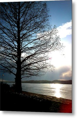 Metal Print featuring the photograph The Lonely Tree by Lucy D