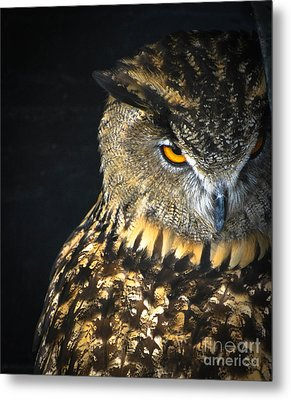 The Look Metal Print by Amy Porter