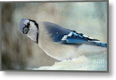 Metal Print featuring the photograph The Look by Brenda Bostic