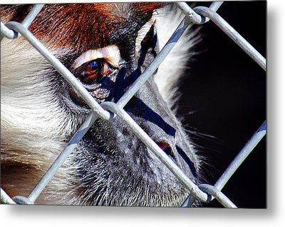 Metal Print featuring the photograph The Look Of Despair by Jason Politte