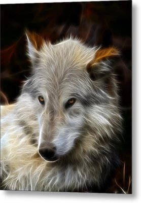 The Look Metal Print by Steve McKinzie