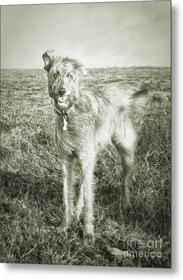The Lurcher  Metal Print